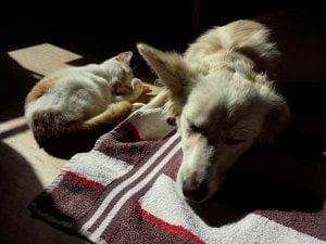 Cohabitation chien et chaton