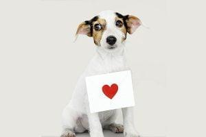 L'insuffisance cardiaque du chien
