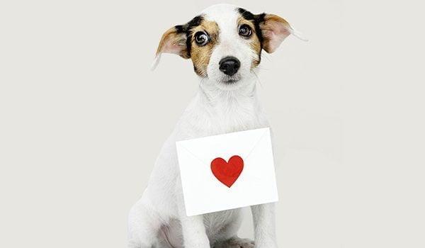 Insuficiencia cardíaca en perros: causas, síntomas y tratamiento