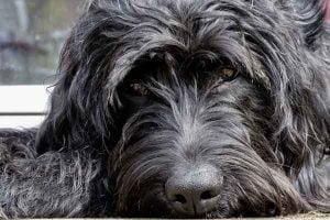 Un chien qui ne mange plus ses croquettes