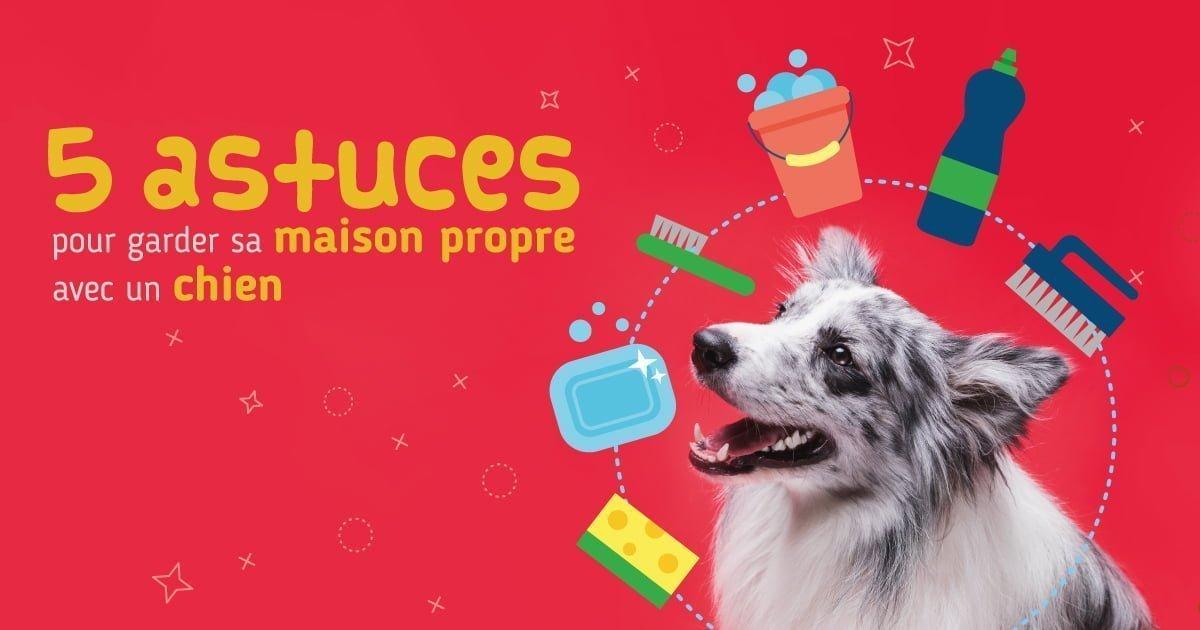 5 astuces pour une maison propre avec un chien - Astuce maison propre ...