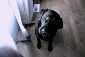 test de QI pour chien